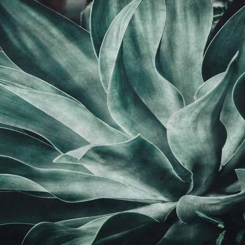 традиционной картинки серо-зеленых цветов для бухгалтера
